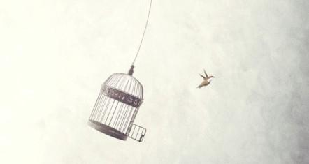 freedome-liberation-620x330