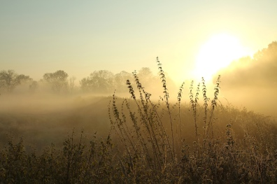 Stock-plants-meadow-sunrise